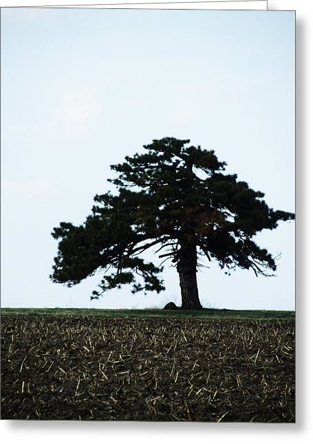 Lonely Tree #1 Greeting Card by Todd Sherlock