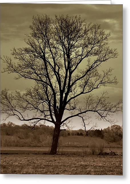 Lonely Tree Greeting Card by Marty Koch
