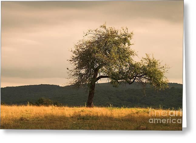 Lonely Tree Greeting Card by Odon Czintos