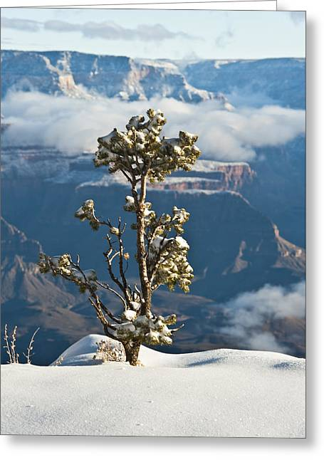 Lonely Tree Over The Grand Canyon Greeting Card