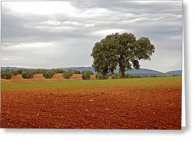 Lonely Tree Greeting Card by Perry Van Munster