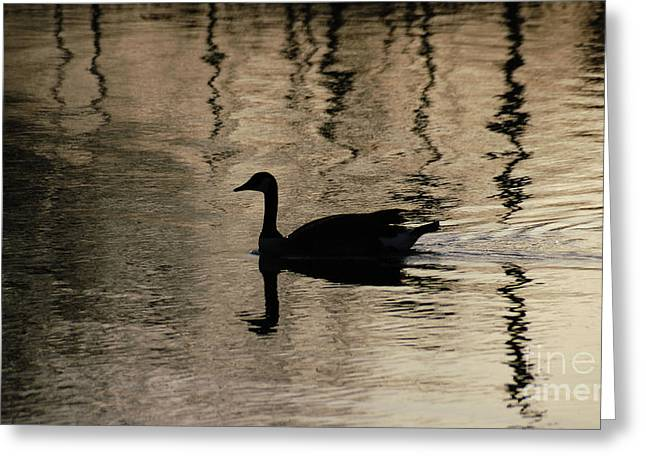 Greeting Card featuring the photograph Lonely by Vilas Malankar