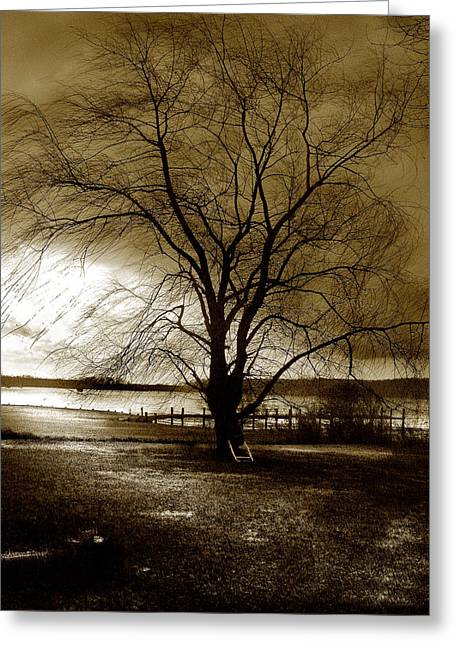 Lonely Willow Greeting Card