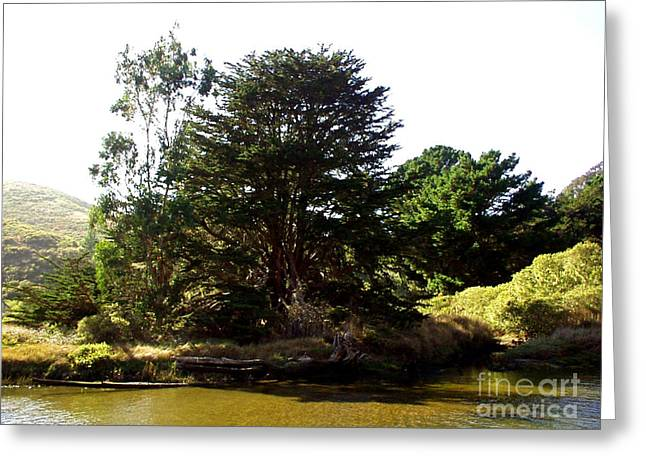 Lonelytree  Greeting Card by The Kepharts