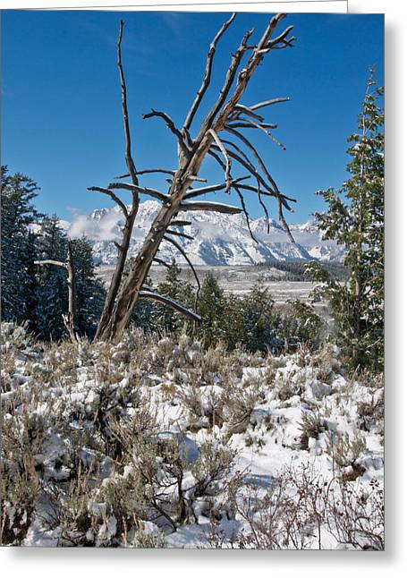 Lonesome Pine Greeting Card by Jay Seeley