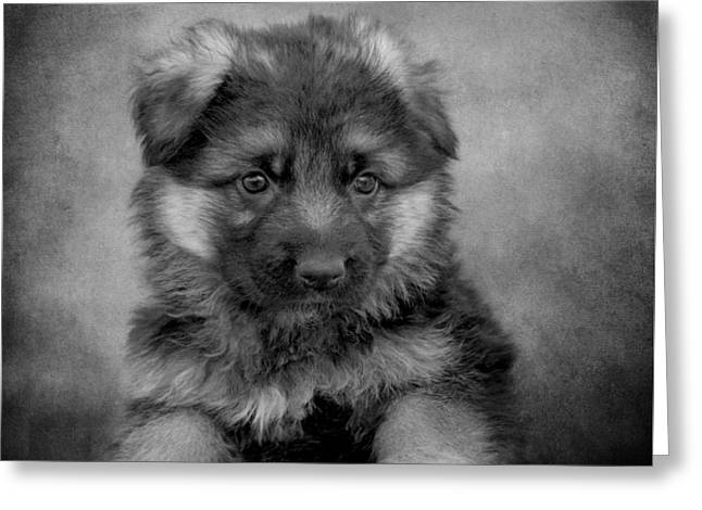 Long Coated Puppy II Greeting Card