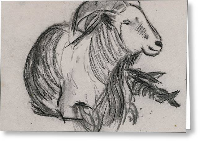 Long Horn Mountain Goat Greeting Card by Ethel Vrana