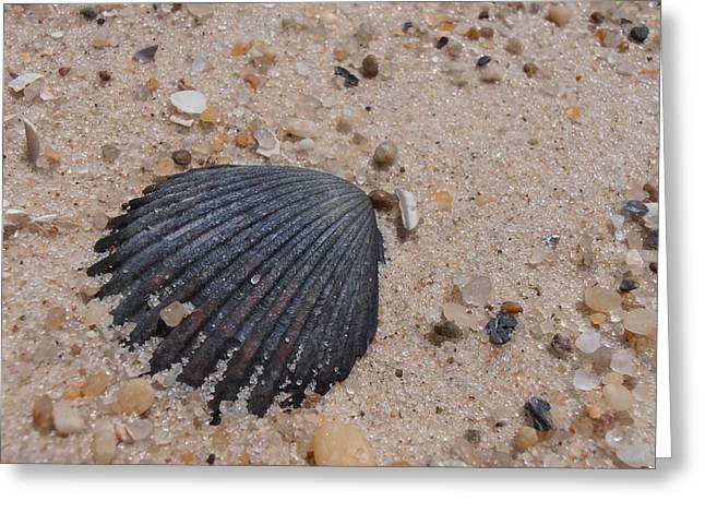 Long Island Scallop Shell Greeting Card