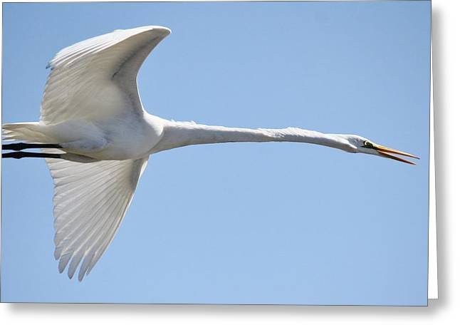 Long Neck Greeting Card by Paulette Thomas
