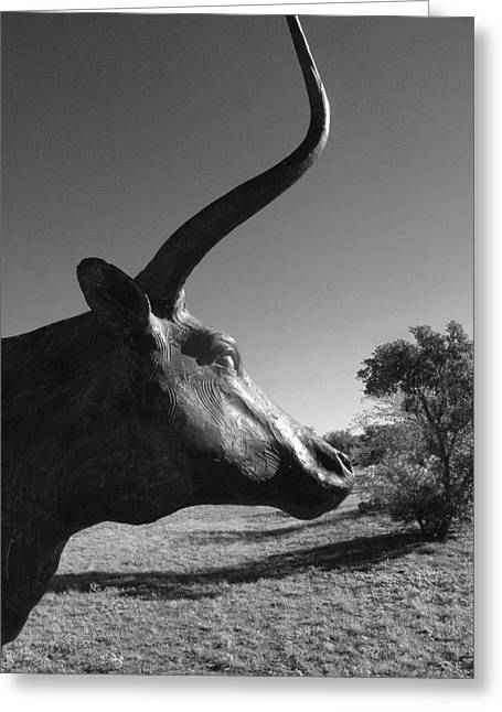 Longhorn Greeting Card by Louis Nugent