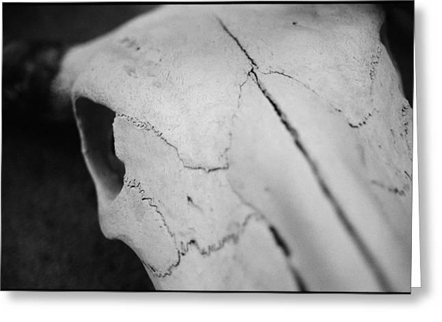 Longhorn Skull Greeting Card by Julie VanDore