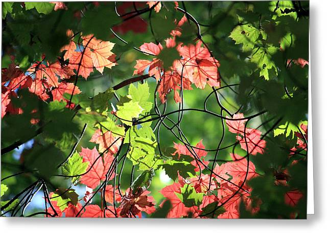 Look Up In Autumn Greeting Card by Julia Mayo