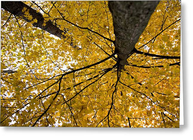 Look Up It Is Fall Greeting Card