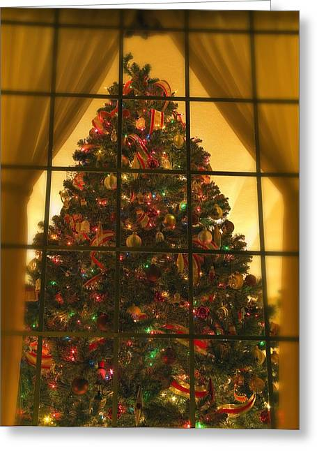 Looking At Indoor Christmas Tree Greeting Card