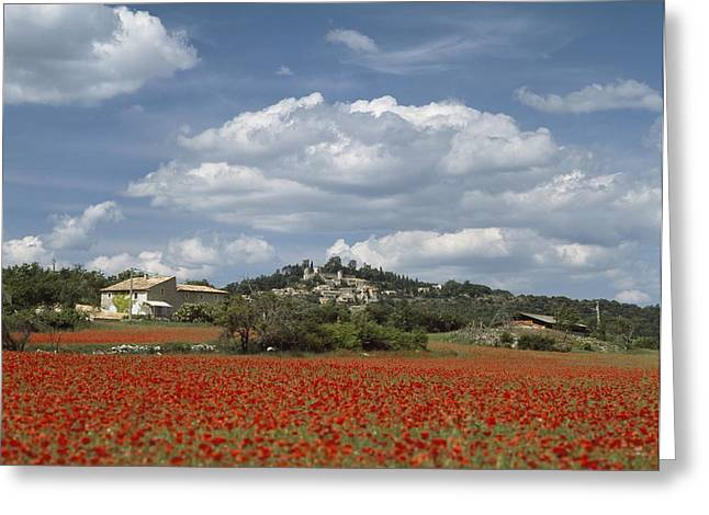 Looking Over A Field Of Red Poppies Greeting Card