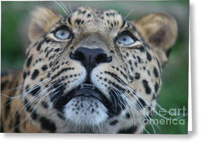 Looking Up Greeting Card by Carol Wright