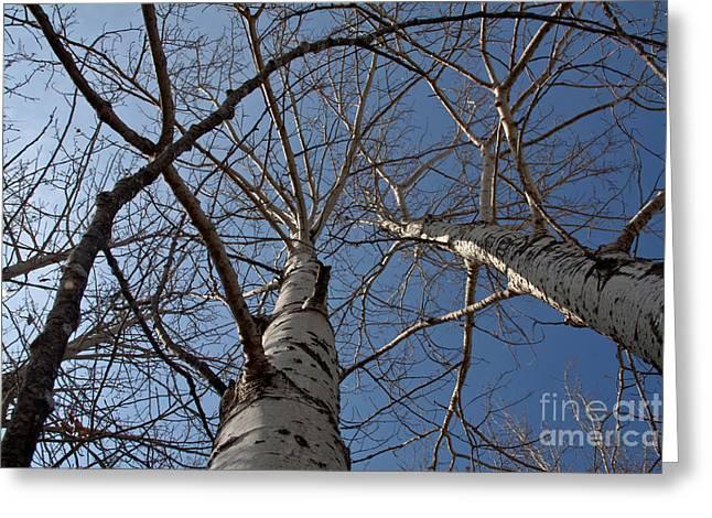 Looking Up Greeting Card by Rachel Duchesne