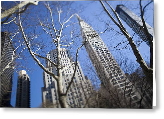 Looking Up Through Trees At Skyscrapers Greeting Card by Axiom Photographic