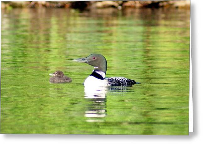 Loons Big And Small Greeting Card