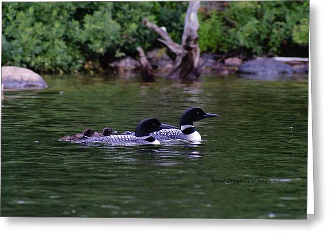 Greeting Card featuring the photograph Loons With Twins 2 by Steven Clipperton