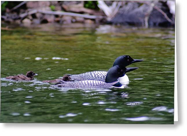Greeting Card featuring the photograph Loons With Twins 3 by Steven Clipperton