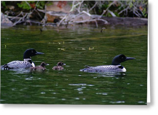 Greeting Card featuring the photograph Loons With Twins by Steven Clipperton