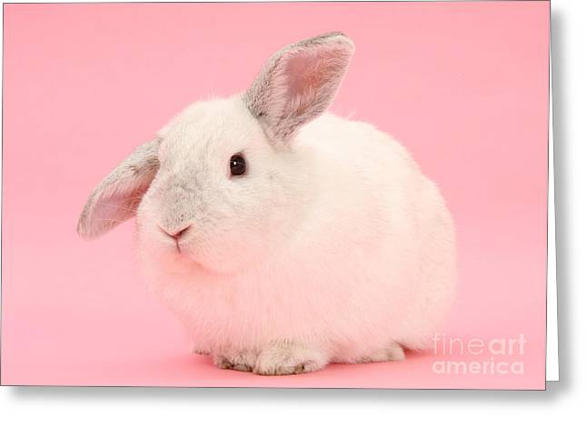 Lop Rabbit Greeting Card by Mark Taylor