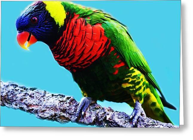 Lory Bird Greeting Card by Paulette Thomas