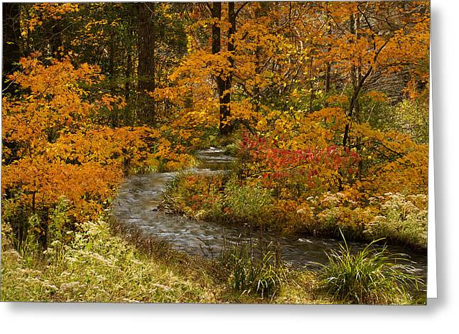 Lost Creek At Beavers Bend Greeting Card