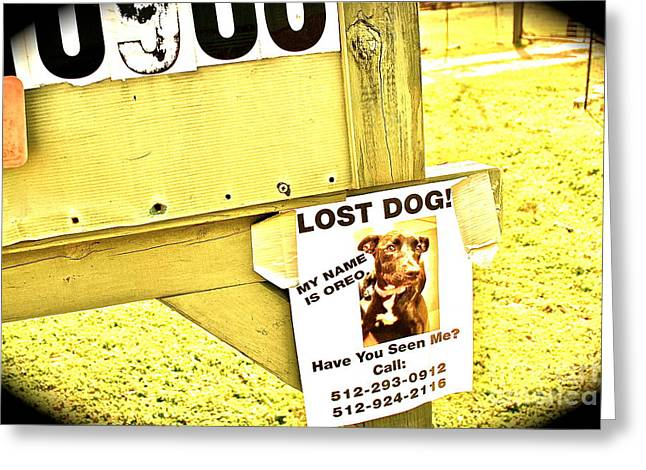 Lost Dog Please Mail Home Greeting Card by Chuck Taylor
