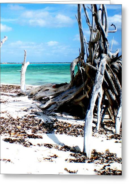 Greeting Card featuring the photograph Cozumel Mexico  Paradise On Earth by Danielle  Parent