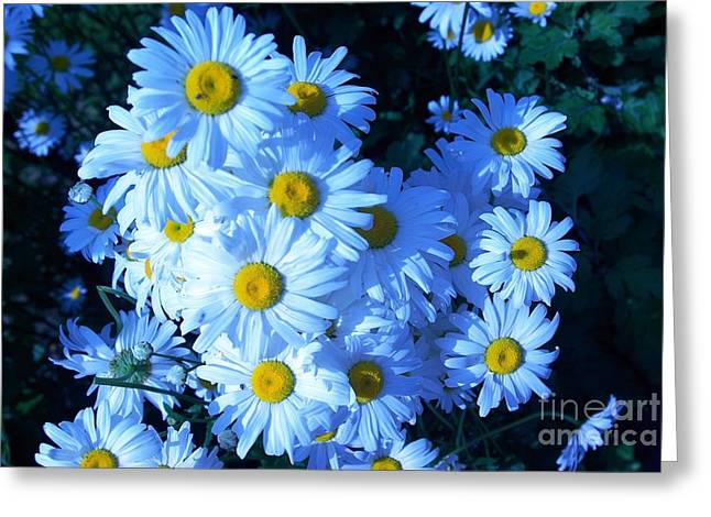 Greeting Card featuring the photograph Lot Of Daisies by AmaS Art