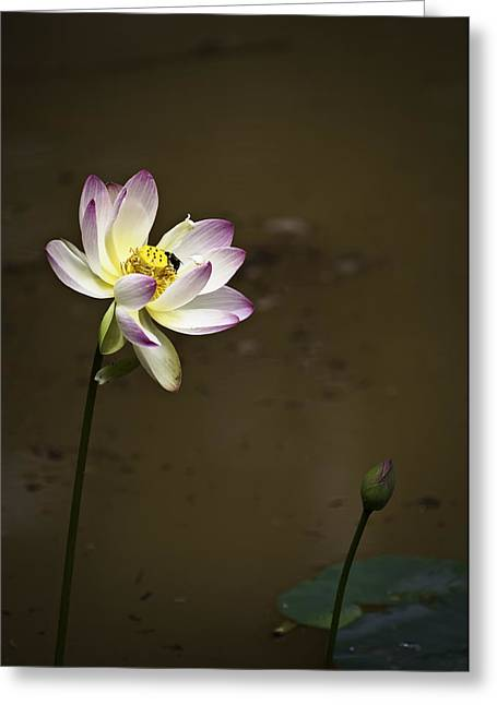 Lotus And Friend Greeting Card by Rob Travis