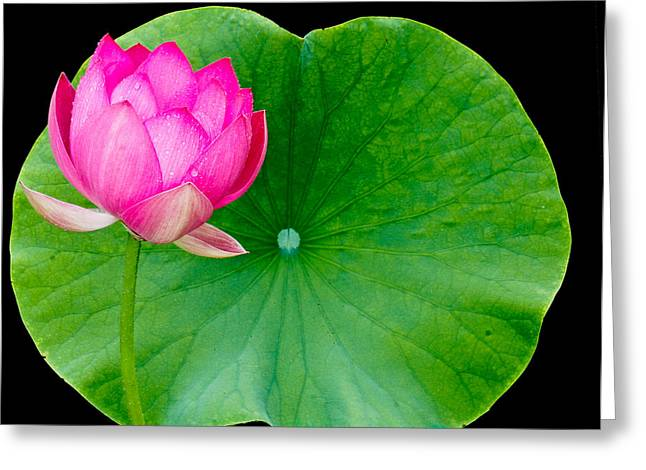 Lotus And Leaf Greeting Card