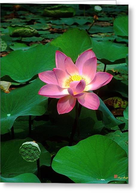 Lotus Flower And Capsule 24a Greeting Card