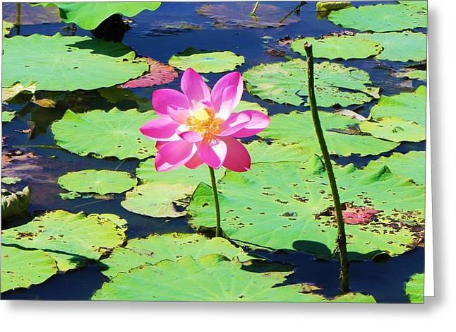 Lotus Flower Greeting Card by Jarrod Faranda
