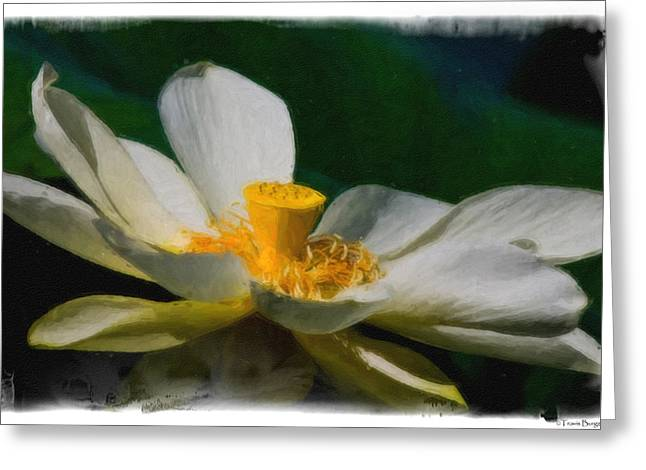 Greeting Card featuring the photograph Lotus by Travis Burgess