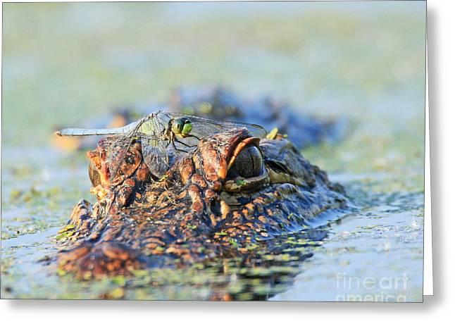 Greeting Card featuring the photograph Louisiana Alligator With Dragon Fly by Luana K Perez