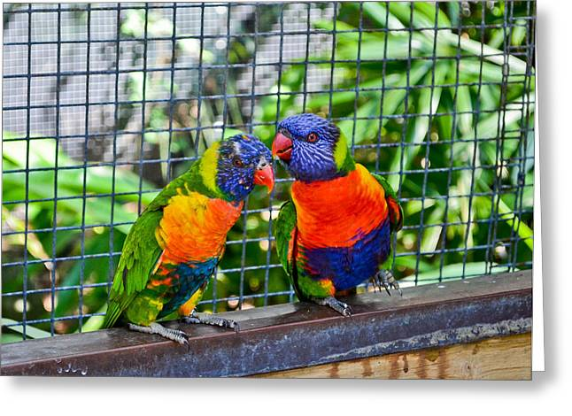 Love Birds Greeting Card by Julio n Brenda JnB