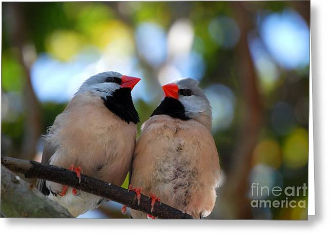 Greeting Card featuring the photograph Love Birds by Linda Mesibov
