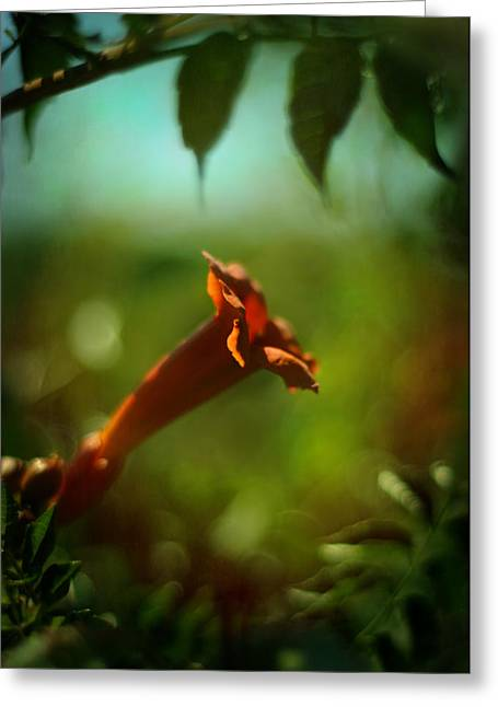 Love Flows Down Greeting Card by Rebecca Sherman