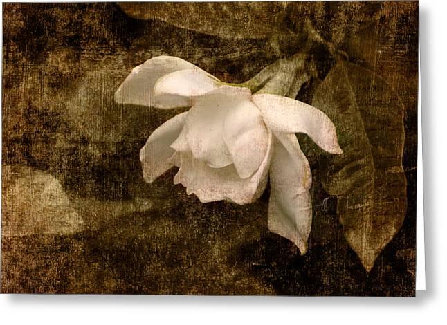 Love Letter Ix Cape Jasmine Gardenia Greeting Card by Jai Johnson