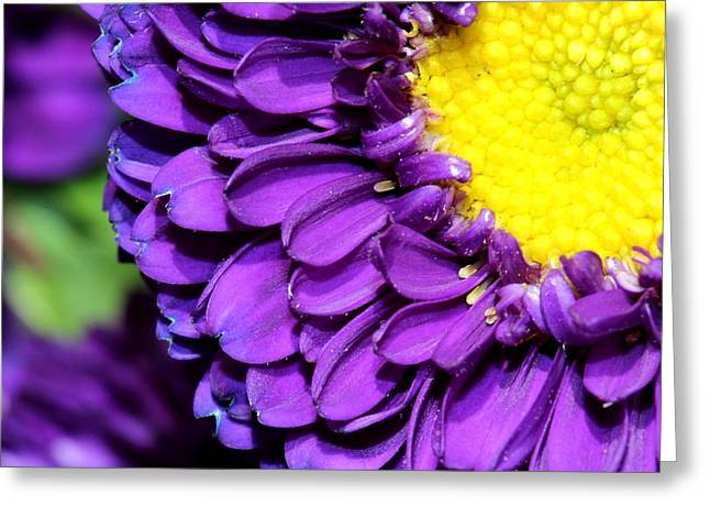 Love The Purple Flower Greeting Card