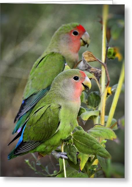 Lovebird Couple  Greeting Card