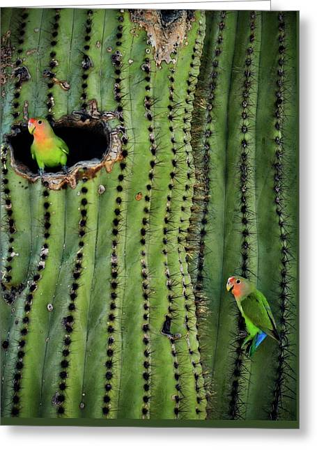 Lovebirds And The Saguaro  Greeting Card