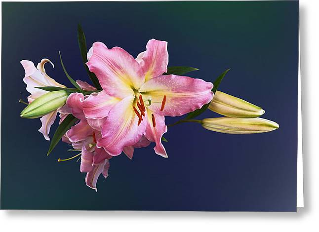 Lovely Pink Lilies Greeting Card by Susan Savad