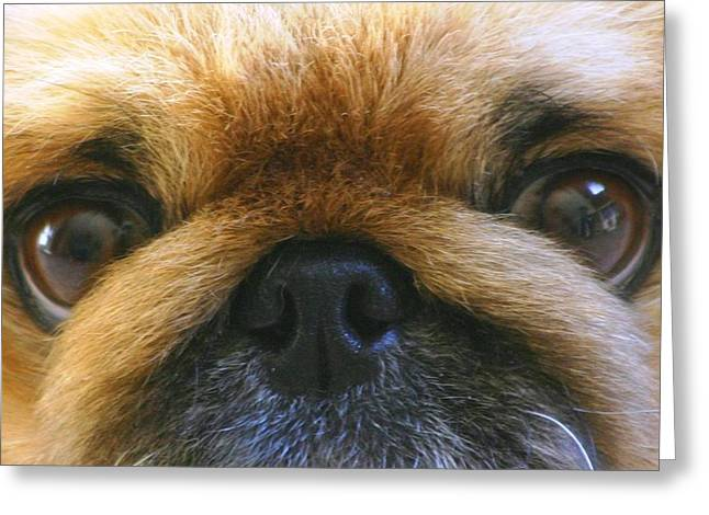 Greeting Card featuring the photograph Loving Eyes by Jeanne Andrews