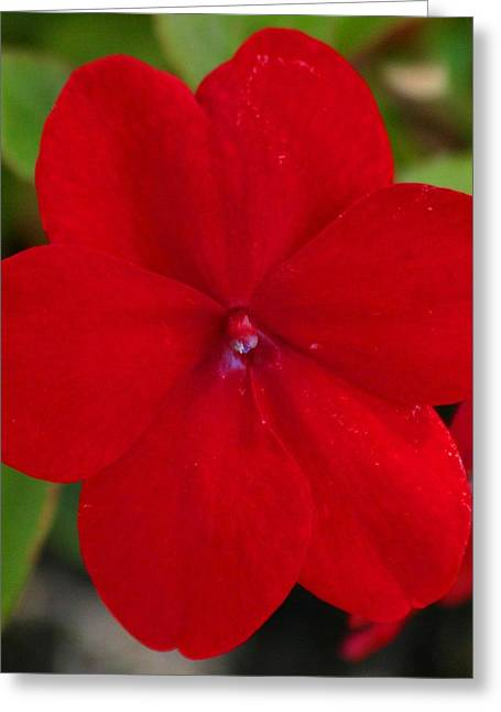 Greeting Card featuring the photograph Loving Red by Jeanne Andrews