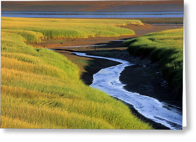 Low Tide At Sunset, Minas Basin, Kings Greeting Card by Ron Watts