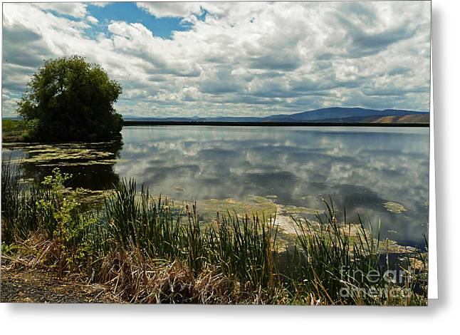 Lower Klamath Lake Greeting Card by Methune Hively